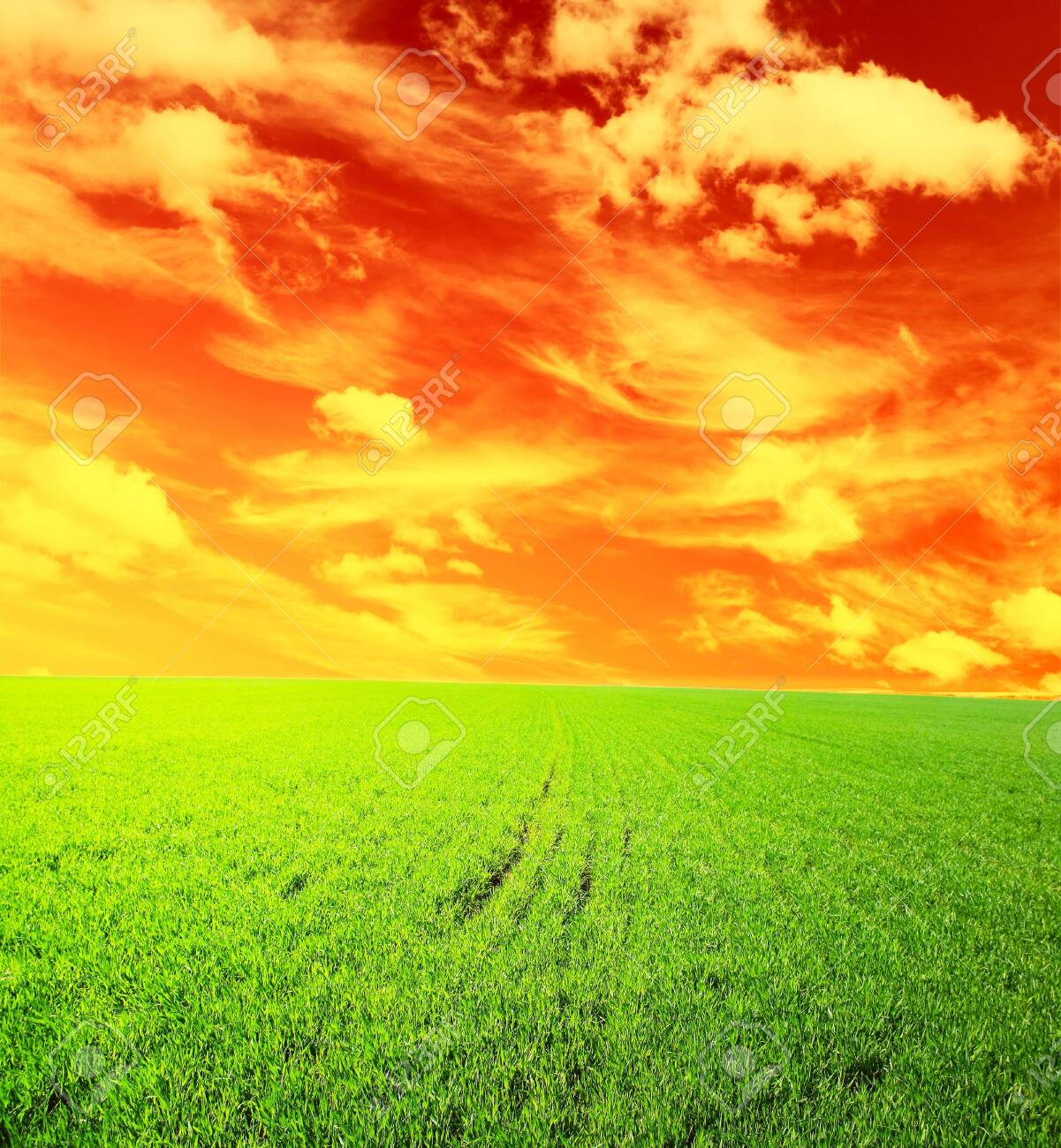 Meadow with green grass under orange sunset with clouds Stock Photo - 5776848