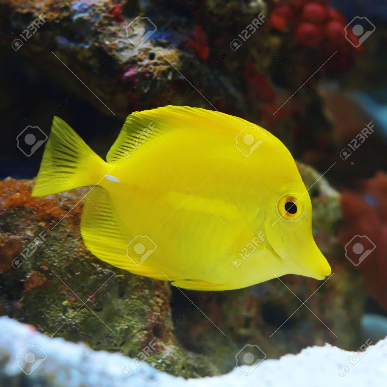 Fish Stock Photo - 5777457