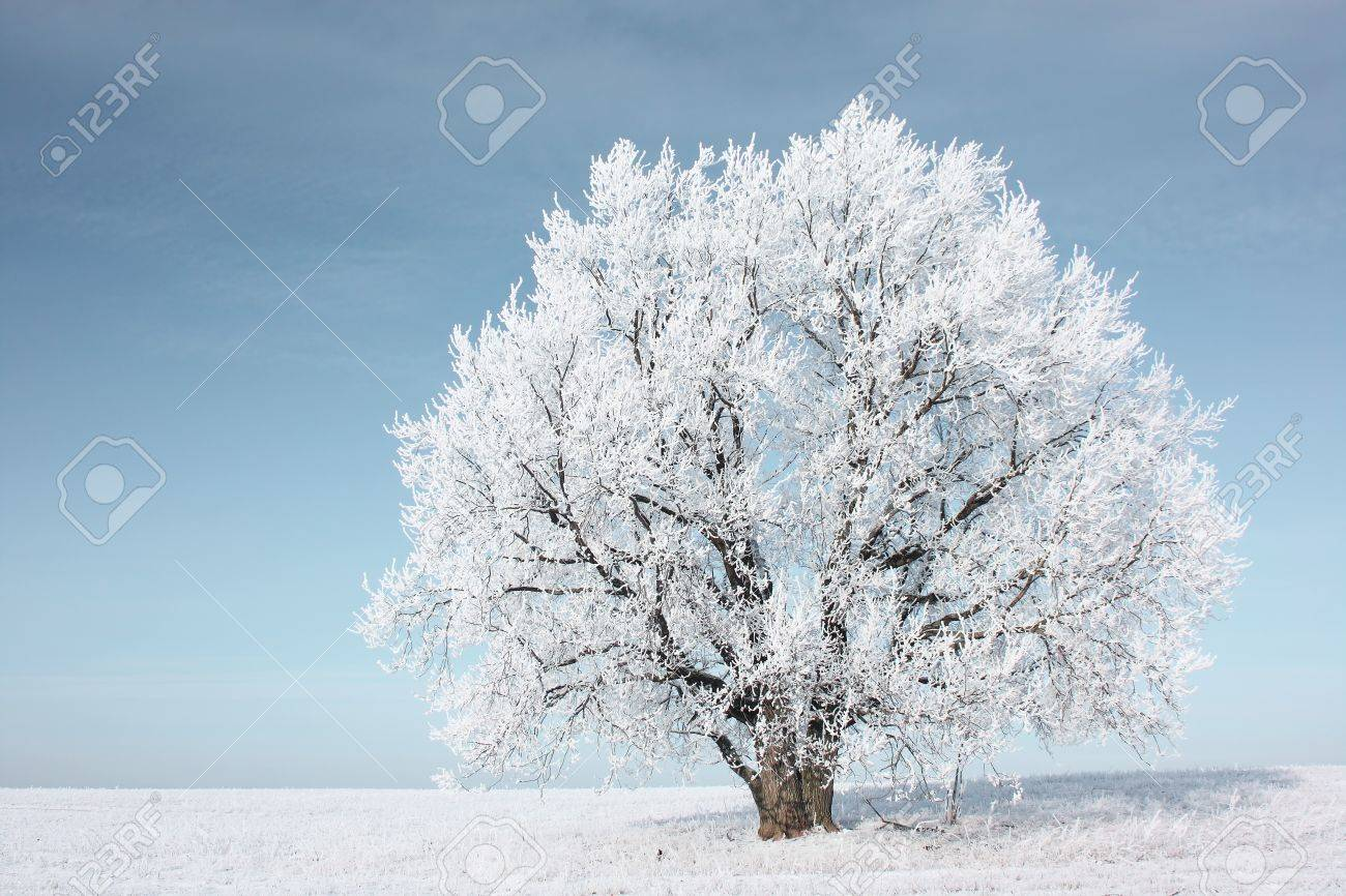 Alone frozen tree in field and blue clear sky Stock Photo - 7296744
