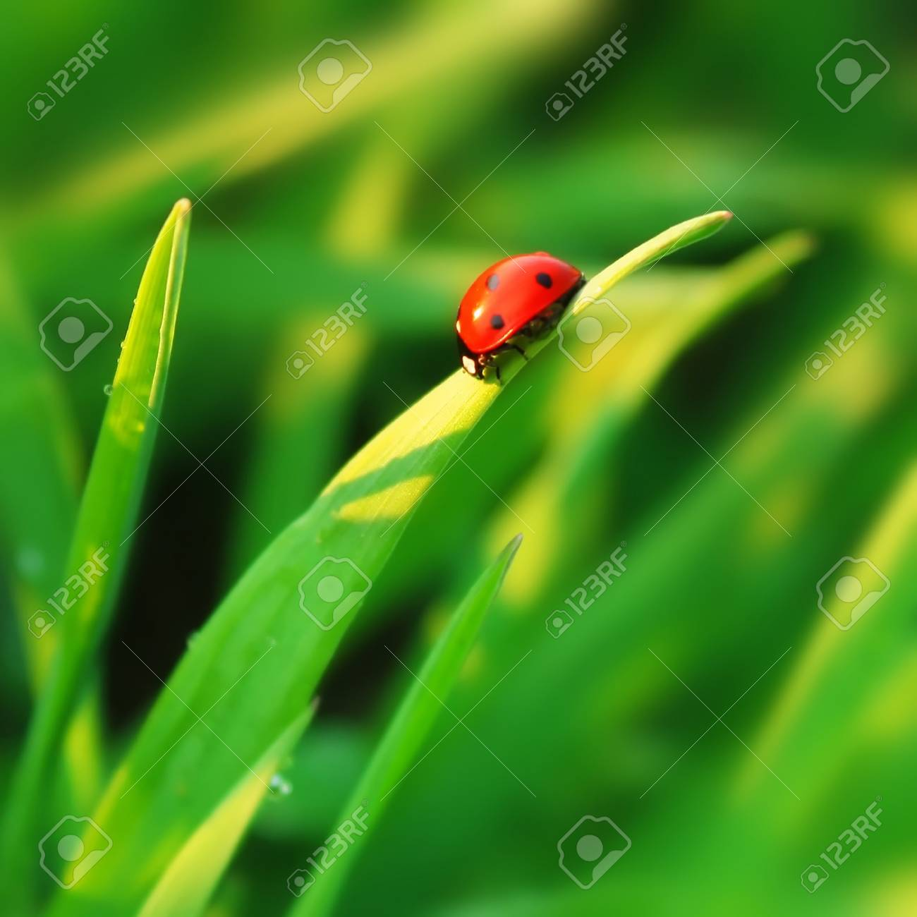Ladybird on grass blade Stock Photo - 7583097