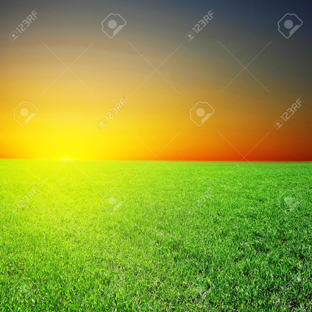 Hi res. image of green field over sunset Stock Photo - 7585926