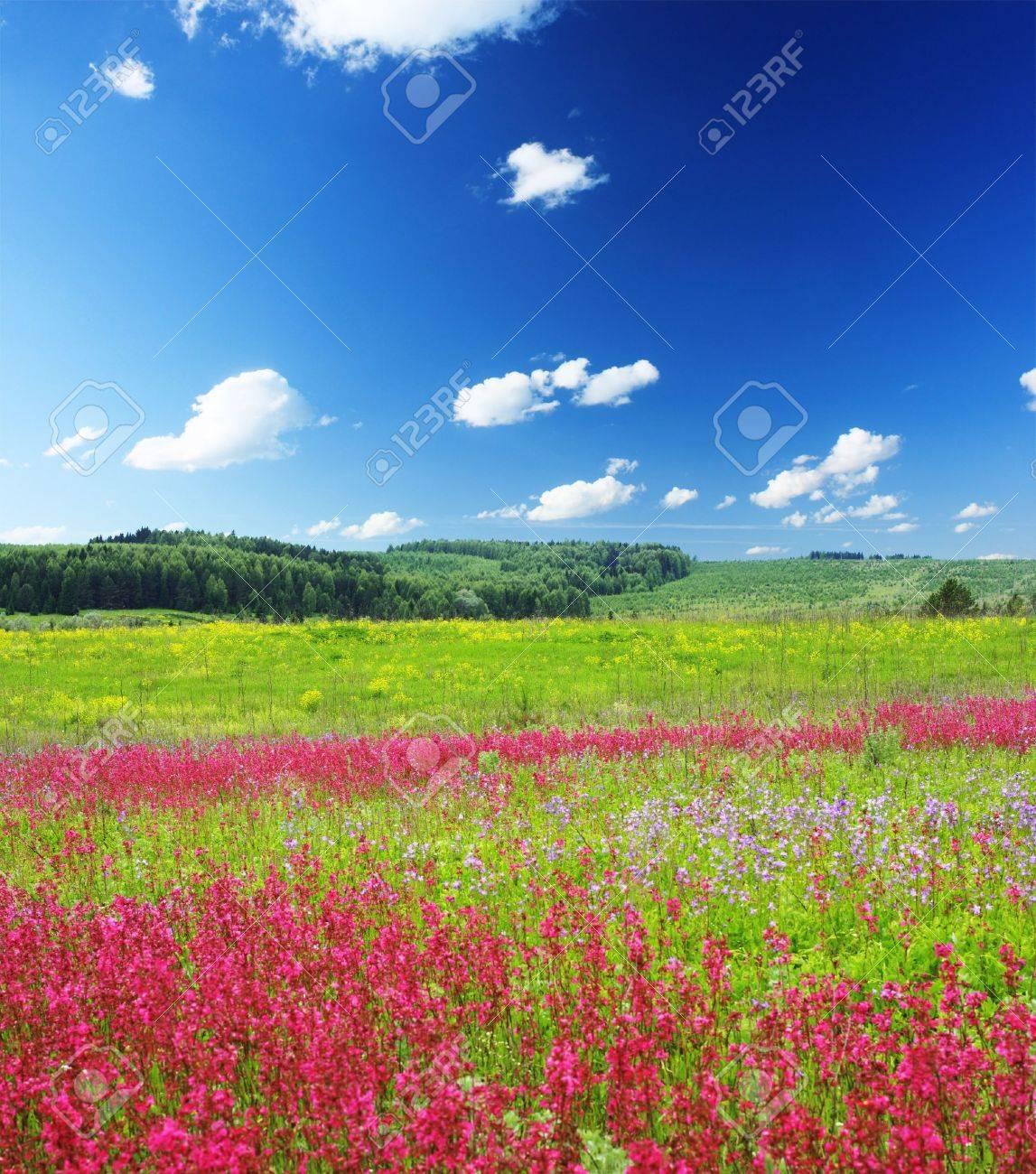 Pres De Fleurs Rose Sauvage Sous Un Ciel Bleu Avec Nuages Banque D