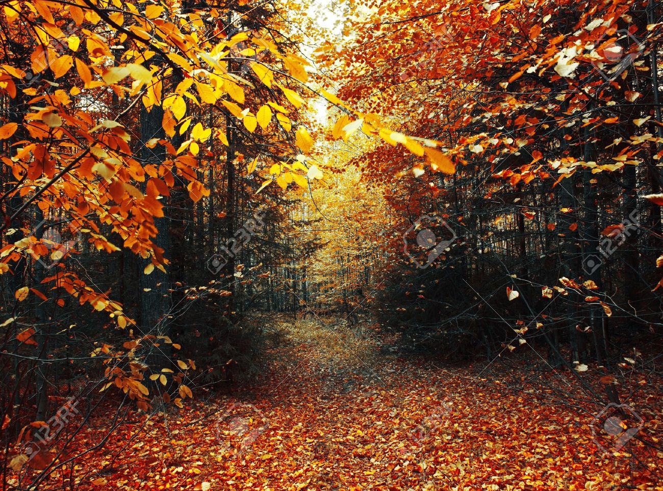 Path in autumn forest - 7898855