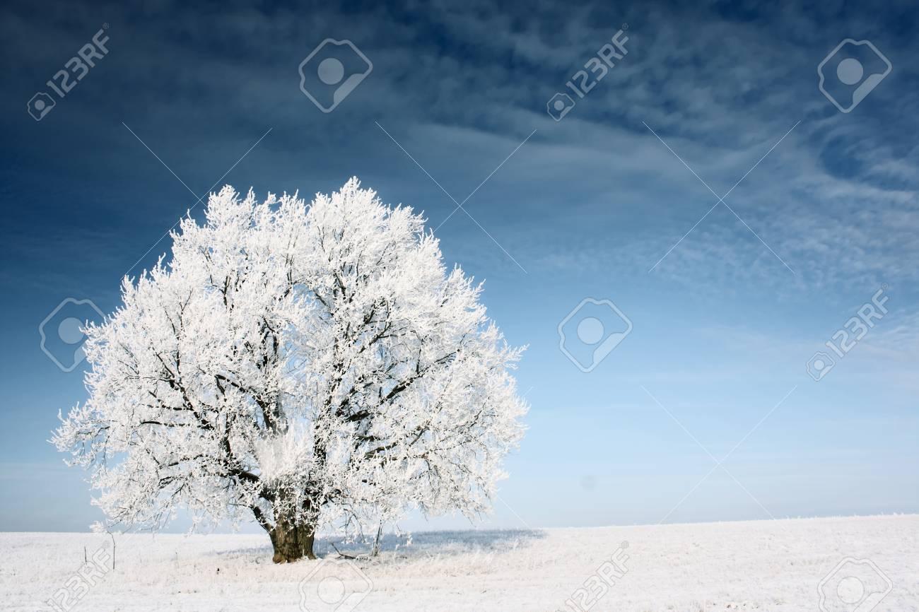 Frozen tree on winter field and blue sky Stock Photo - 8323294