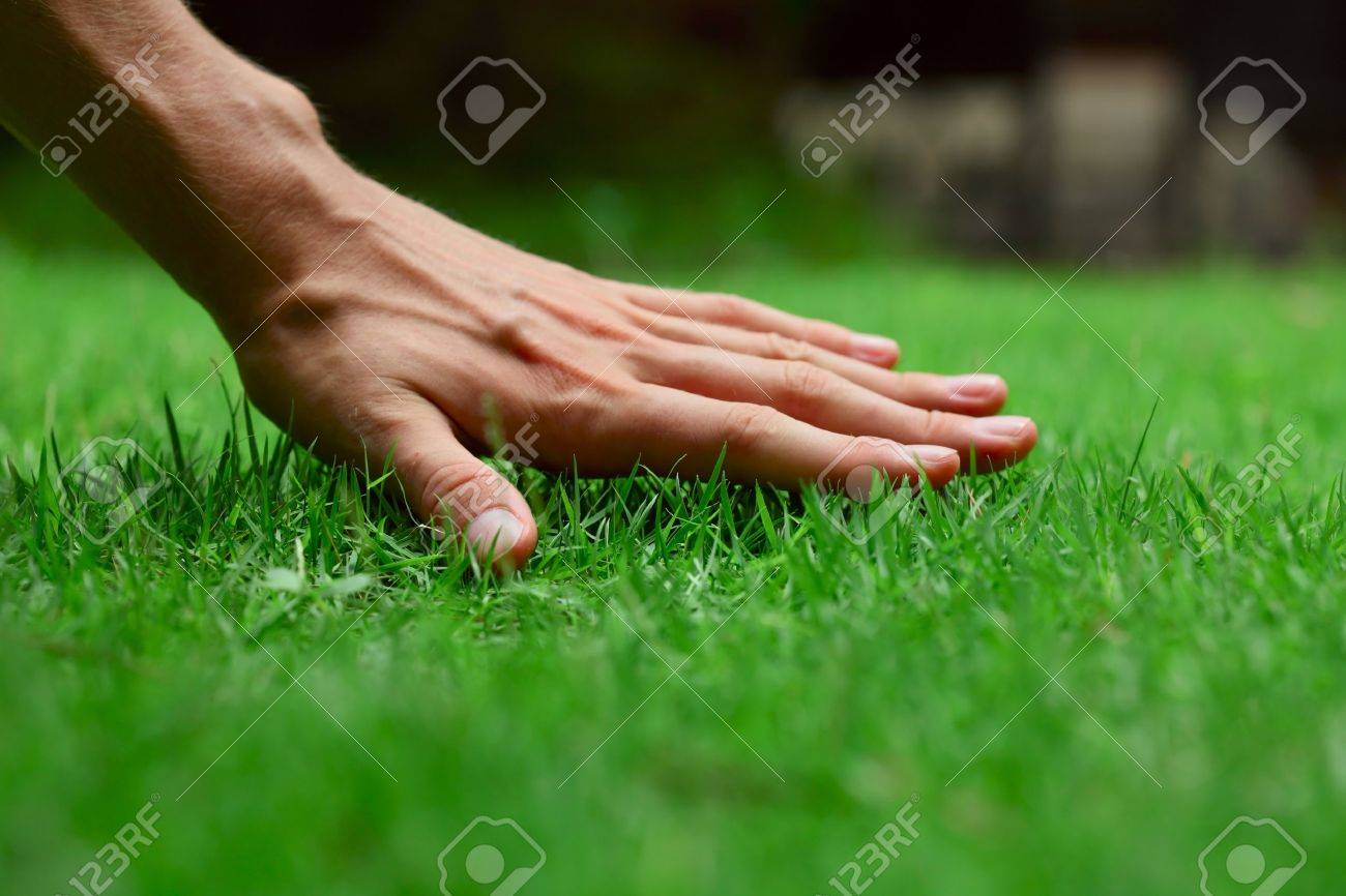 Hand On Green Lush Grass Stock Photo, Picture And Royalty Free ...