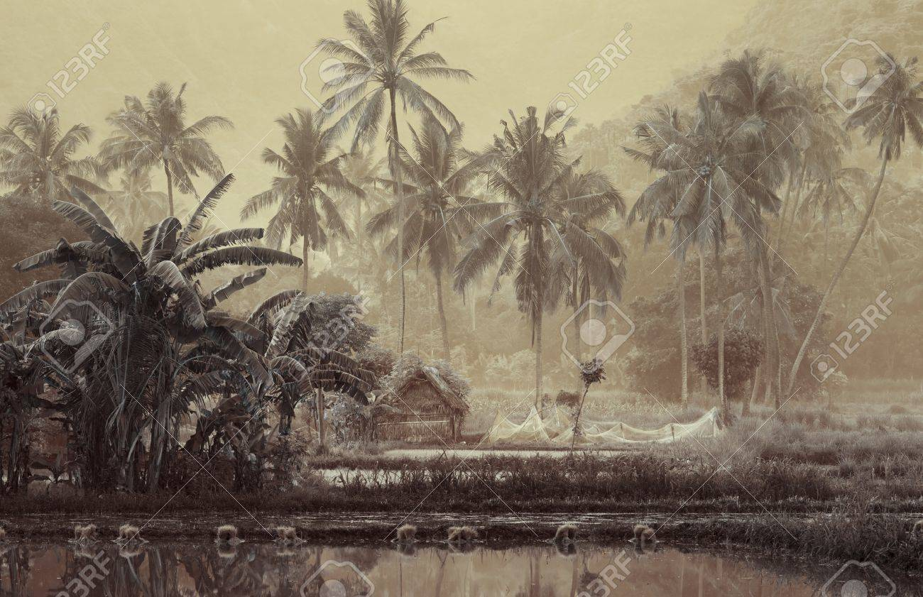 Small wooden house with fishing net in tropical forest near pond Stock Photo - 8985523