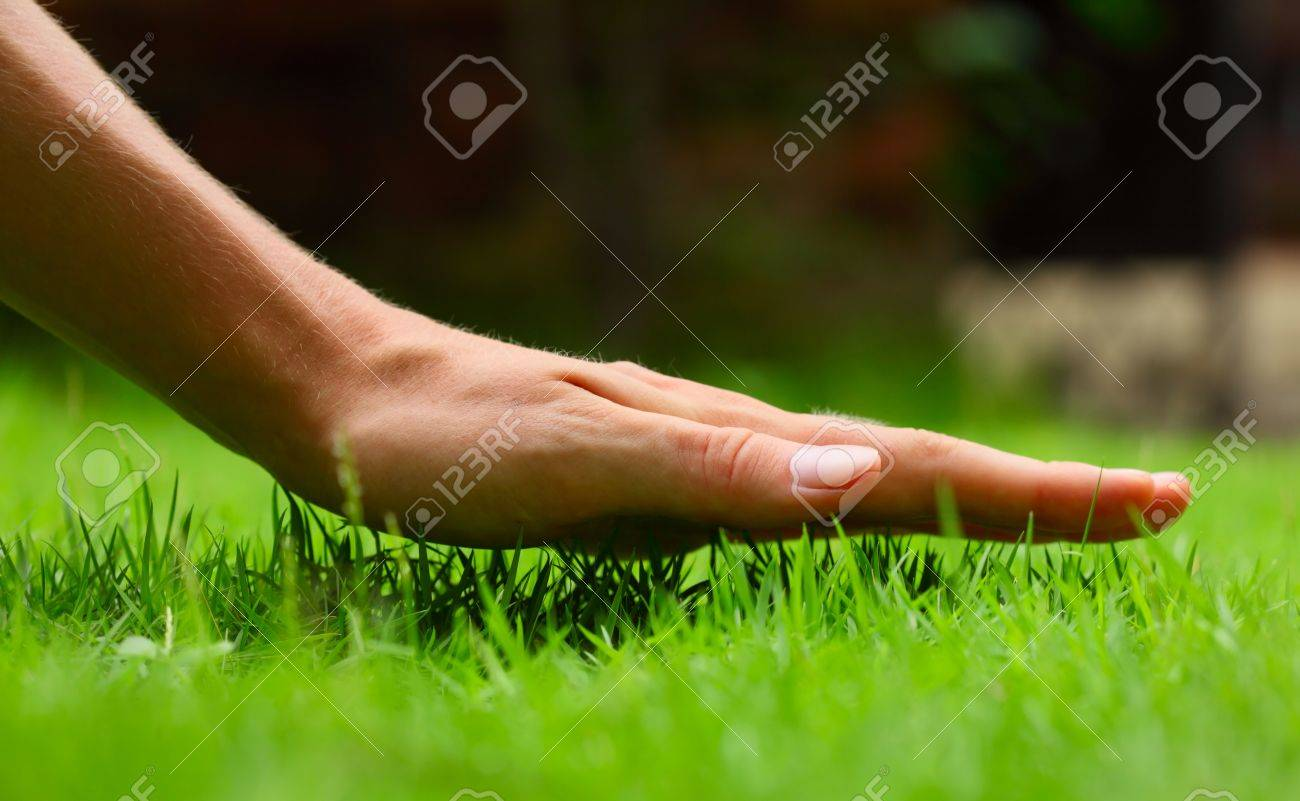 Hand above green fresh grass on a meadow. Shallow DOF - 9912215
