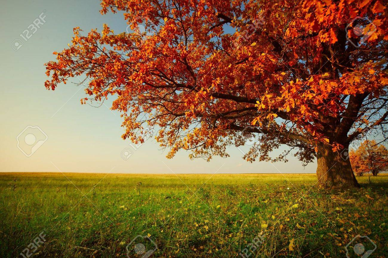 Big autumn oak and green grass on a meadow around Stock Photo - 11149771