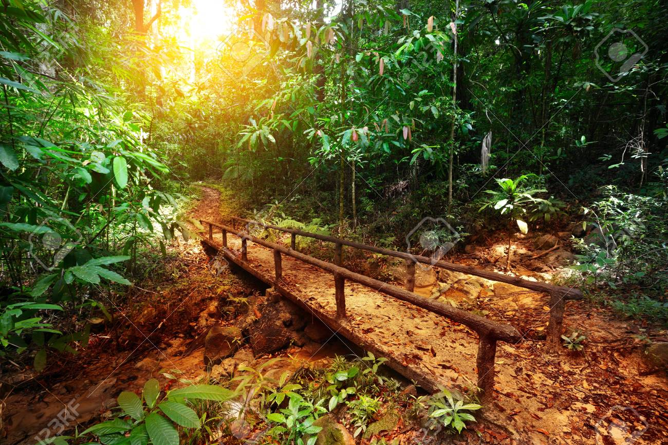 Walkway in a bush tropical forest Stock Photo - 16875537