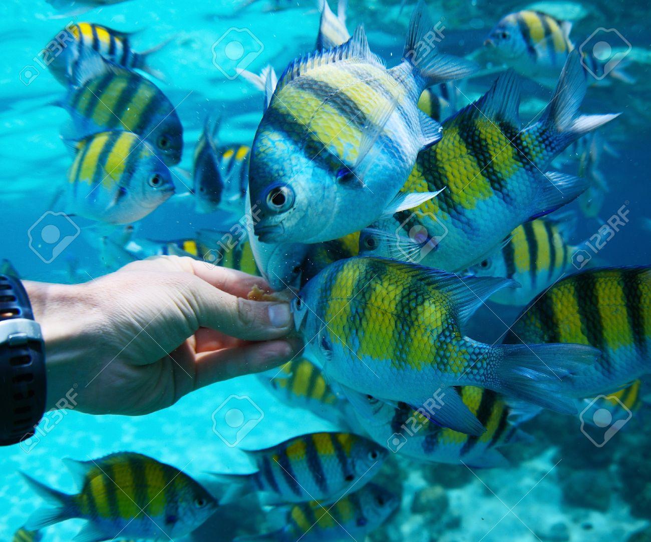 Feeding fish underwater Stock Photo - 20933666