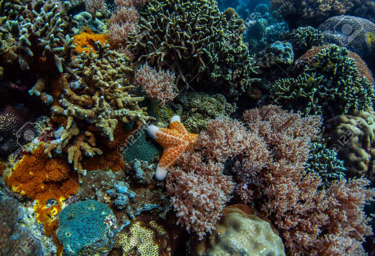 Coral reef in a tropical sea Stock Photo - 25583899