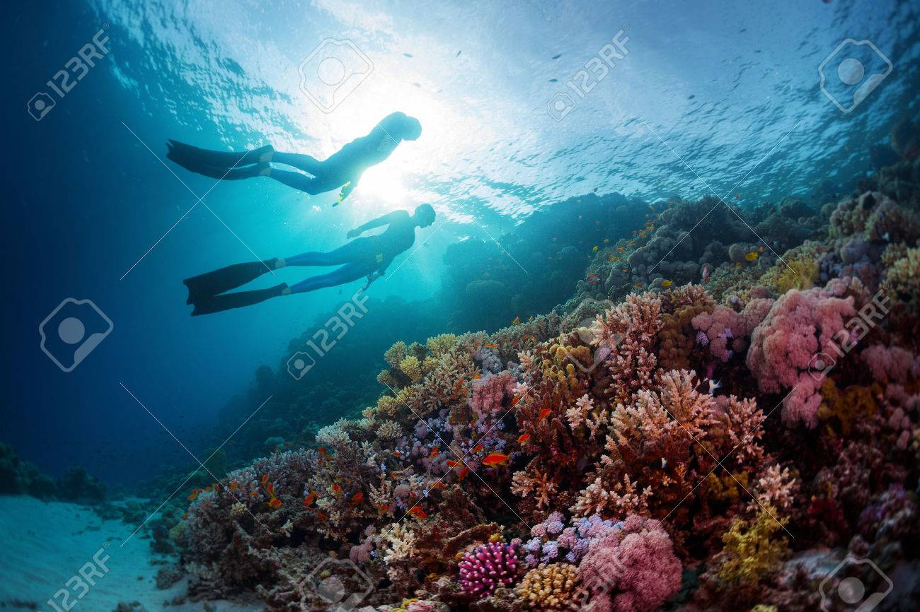 Two freedivers swimming underwater over vivid coral reef. Red Sea, Egypt - 46509912