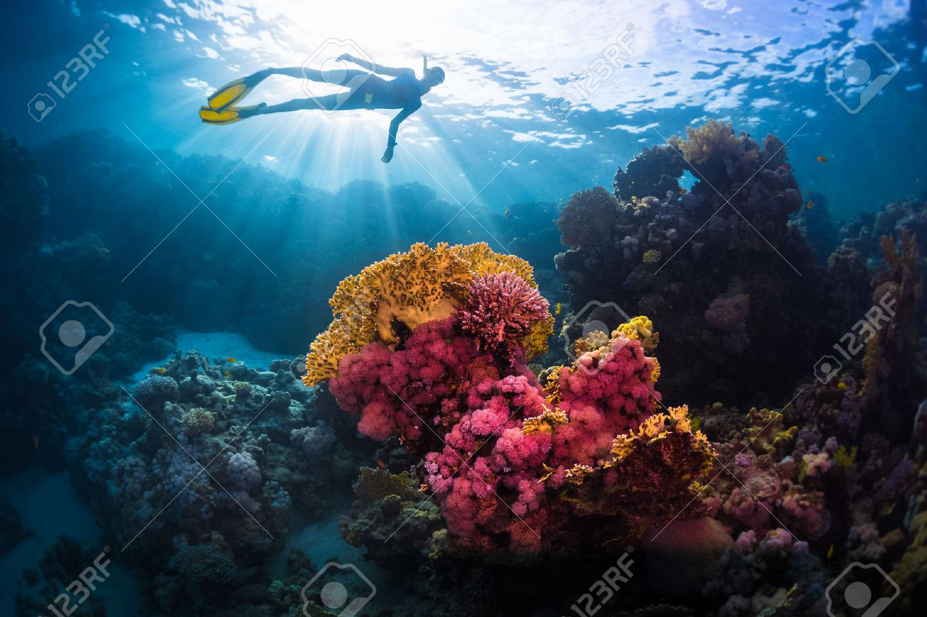 Free diver swimming underwater over vivid coral reef. Red Sea, Egypt - 55267144