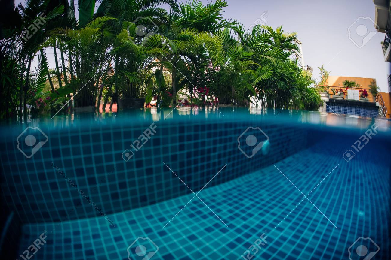 Underwater shot of tiled swimming pool bottom and green plant..