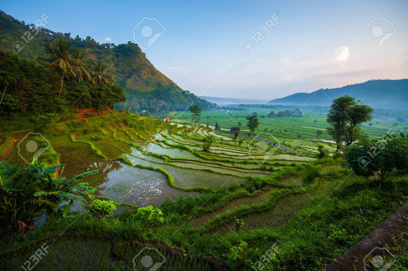 Rice fields of the island of Bali at sunrise, Indonesia - 113031746