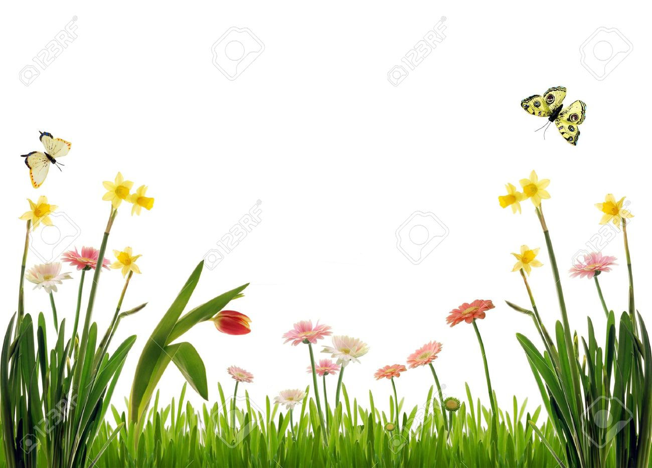 Spring flower scenery with butterflies stock photo picture and spring flower scenery with butterflies stock photo 4480016 izmirmasajfo Images