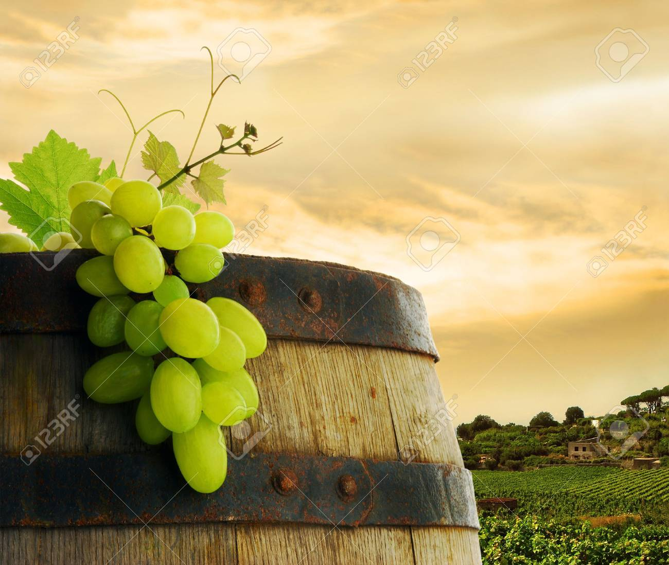 Wine barrel and grape in vineyard Stock Photo - 6508837
