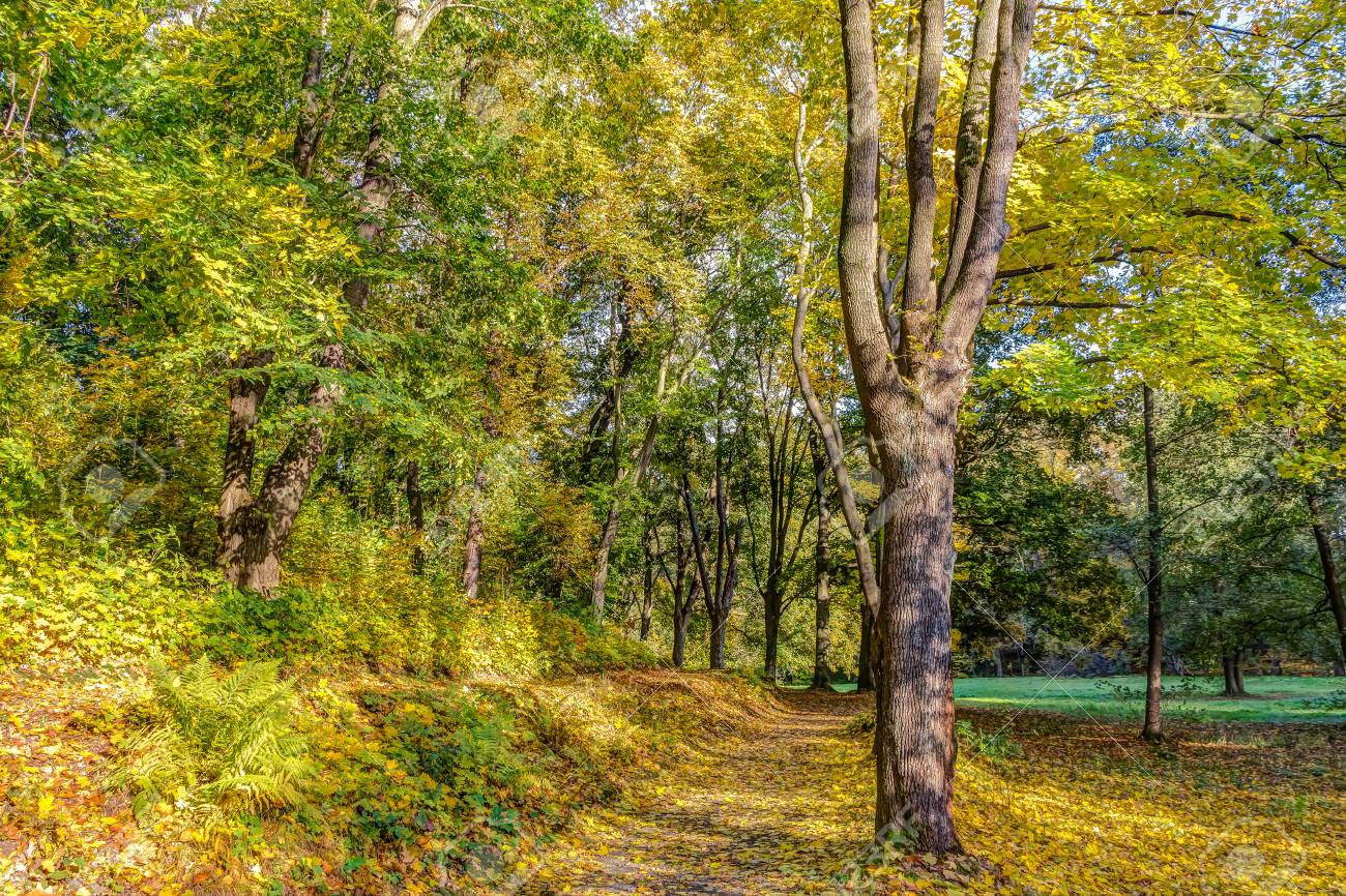 Colorful Forest Scenery Of Trees In Autumn, Leaves Changing Colour ...