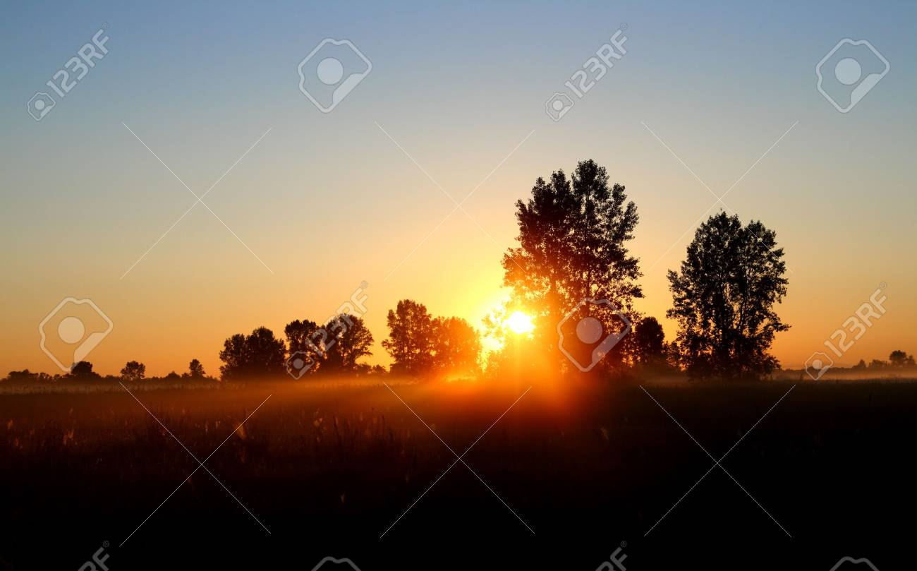field with trees landscape in dusk with sunset Stock Photo - 5156764