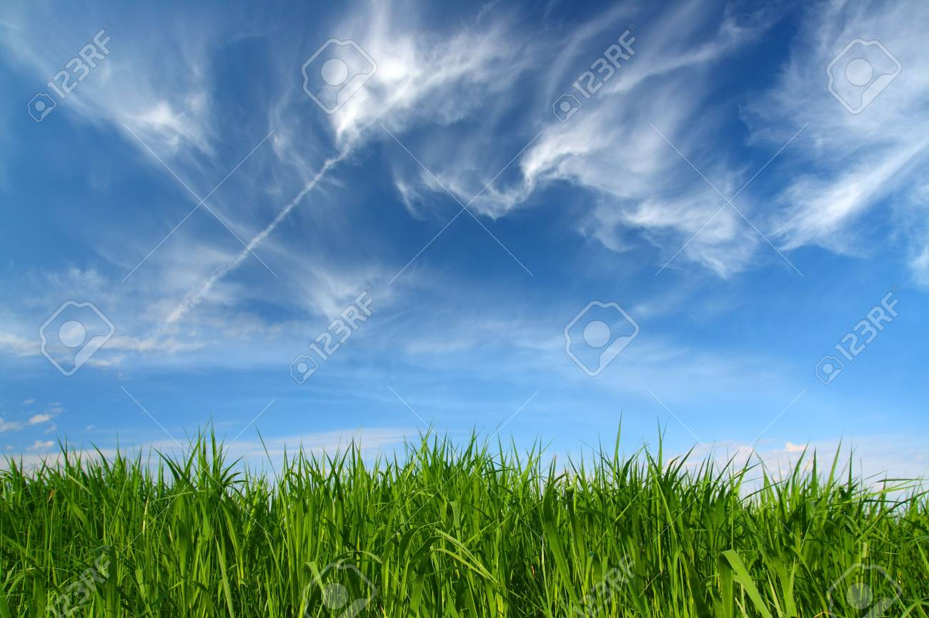 green grass under blue sky with fleecy clouds Stock Photo - 5231993
