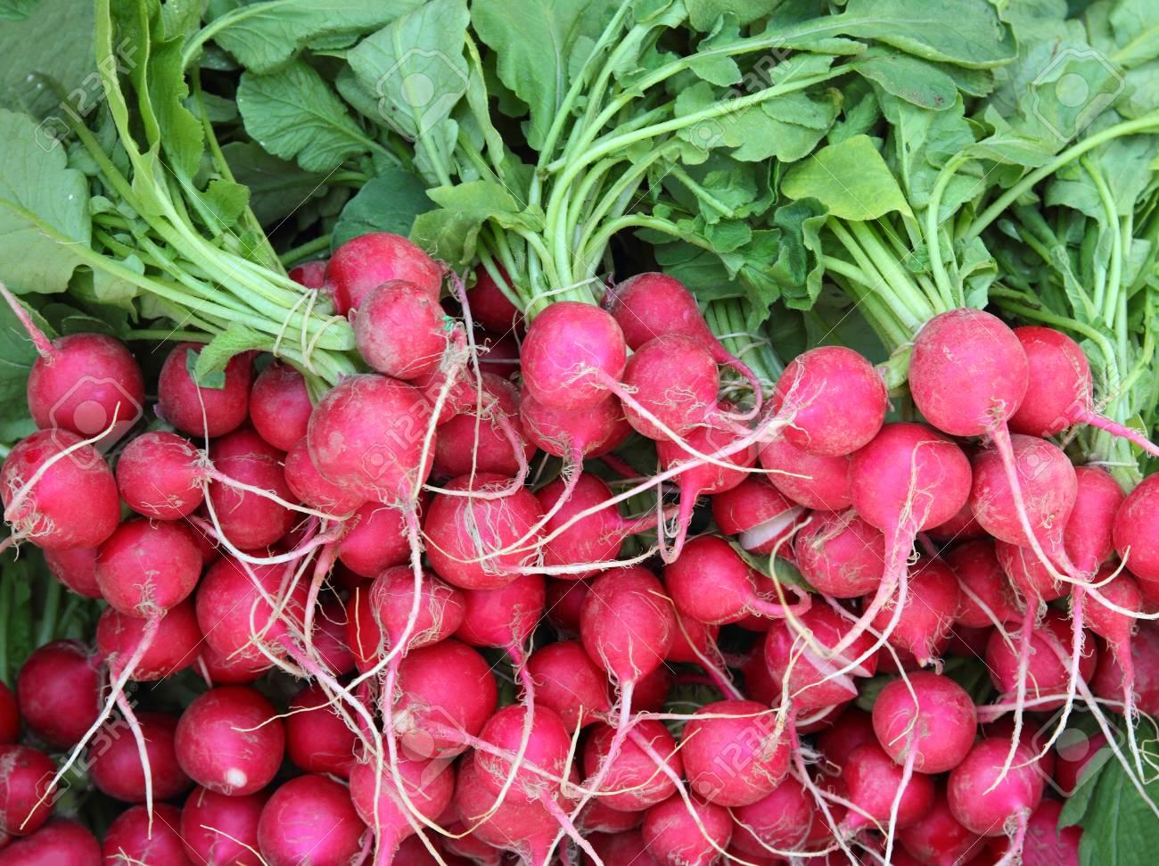 many bunches of radish in market Stock Photo - 23558177