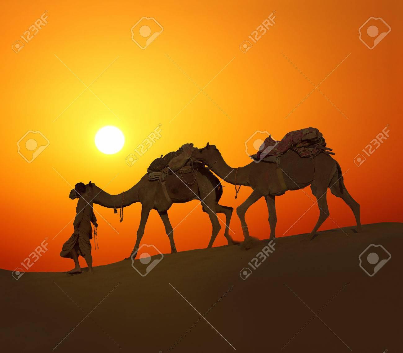 cameleer leading caravan of camels in desert - silhouette against sunset - 26095527