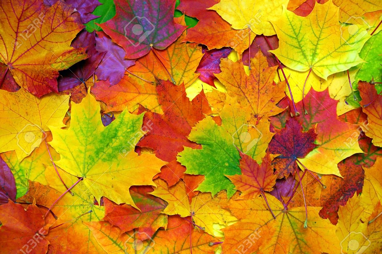 background with autumn colorful leaves Standard-Bild - 43564148