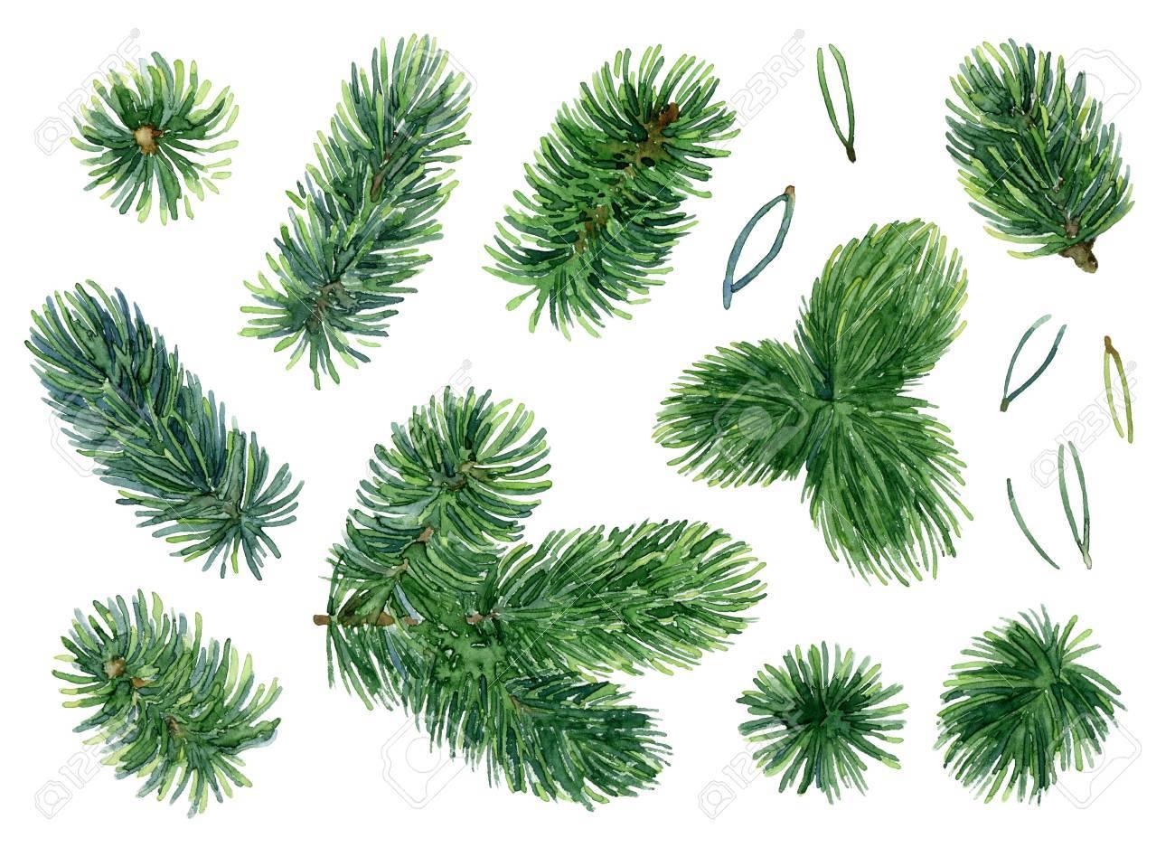 Spruce set