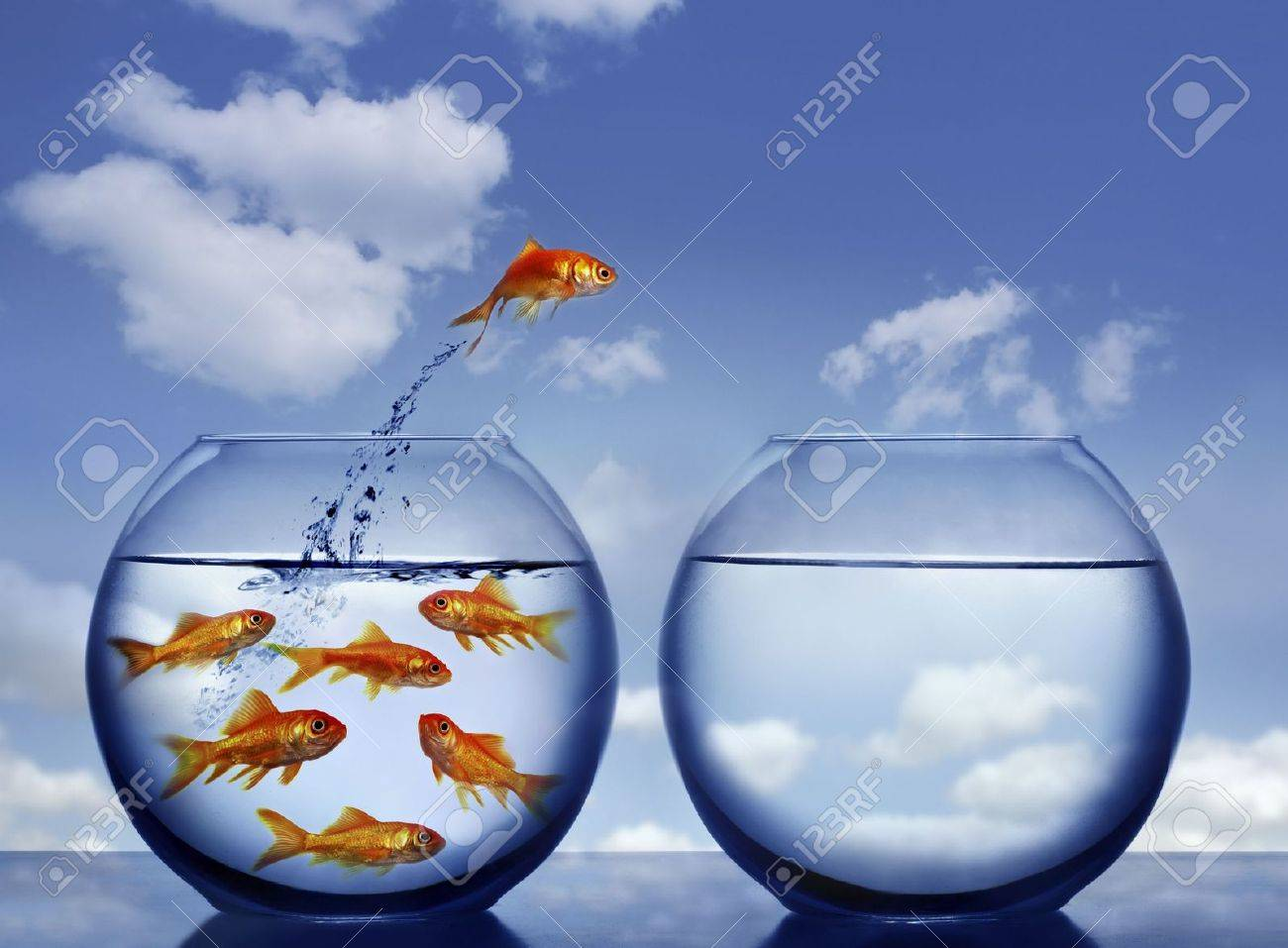 goldfish jumping out of the water from a  crowded bowl Stock Photo - 3764086