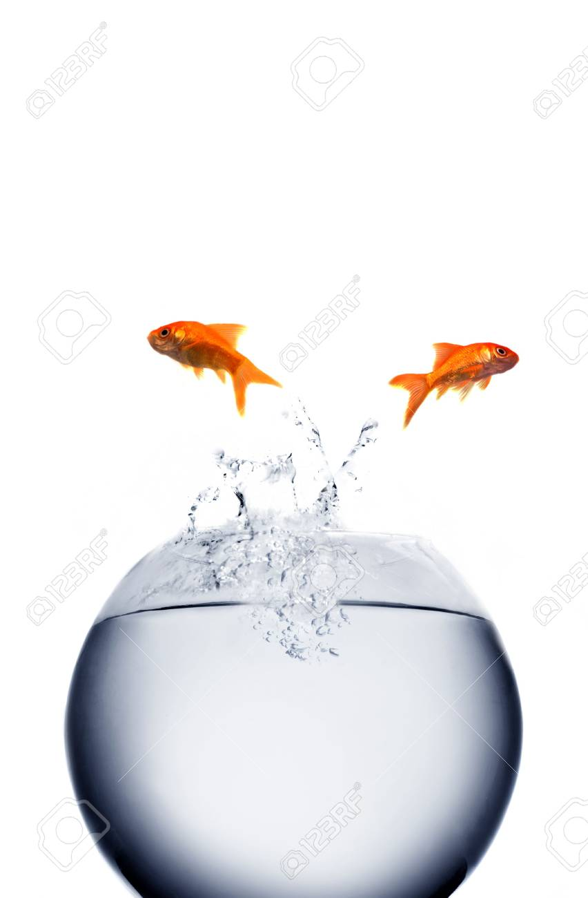 goldfish jumping out of the water Stock Photo - 3776758