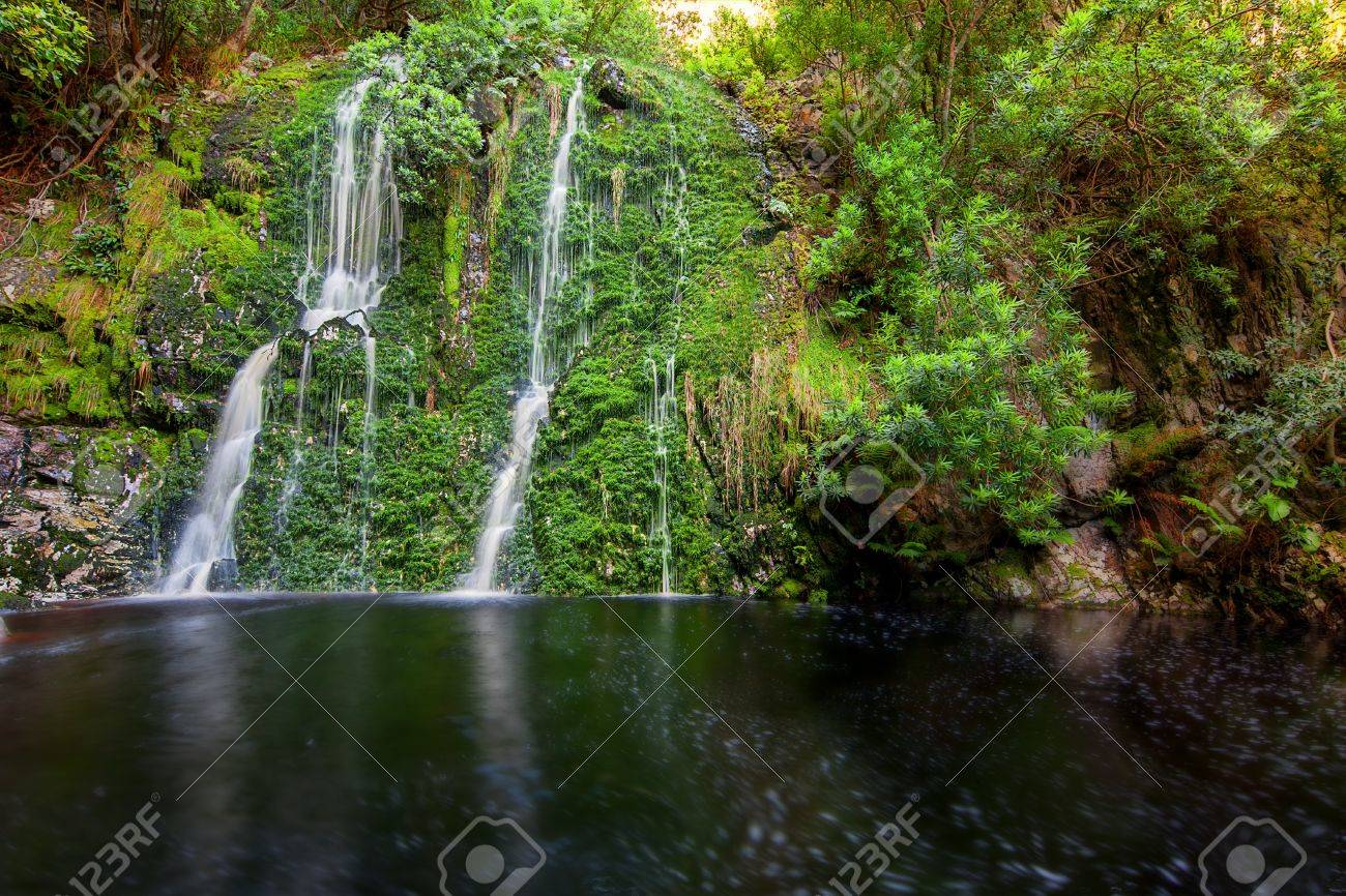 tropical forest stream pond and waterfall with rich foliage and dark water Stock Photo - 16823957