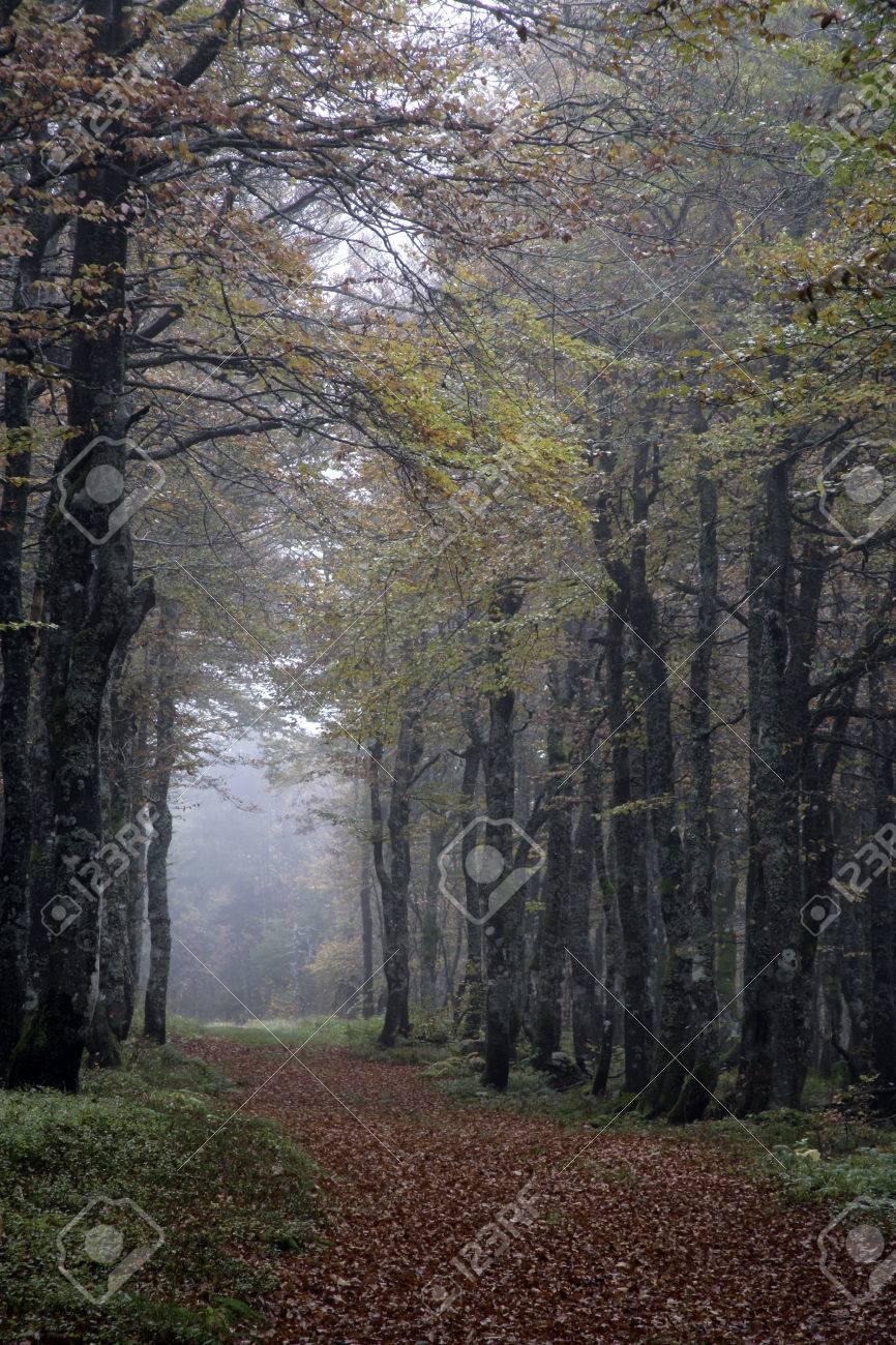 charme, carpinus betulus, bois en france banque d'images et photos