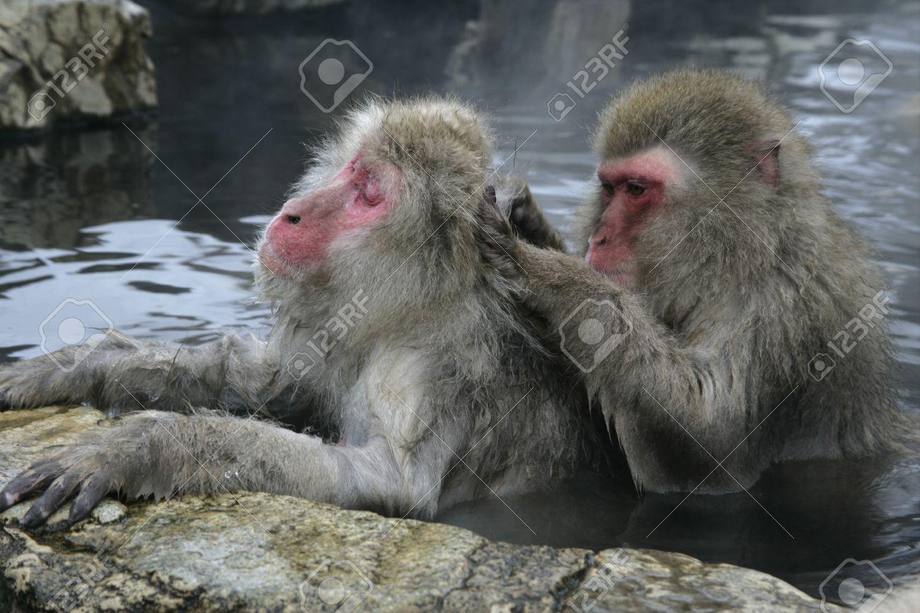 Japan's mammalian riches | The Japan Times