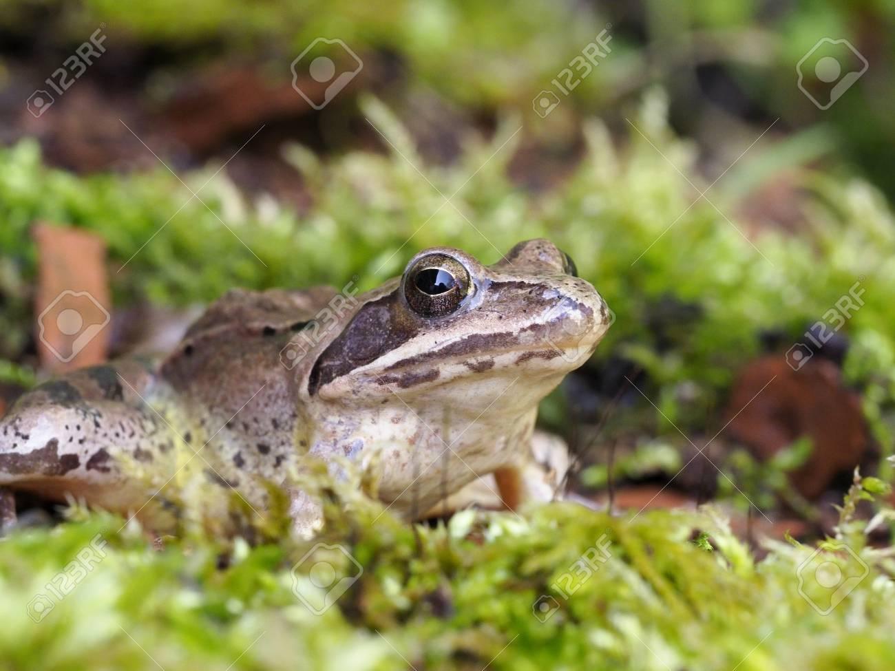 single frogn speed dating i leirfjord