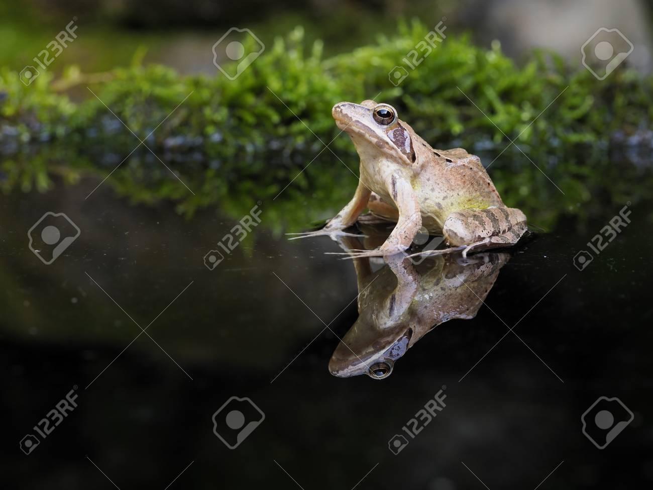 single frogn gulen single