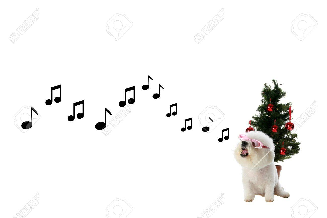 Fifi the bichon frise sings a song of love and happiness and stock fifi the bichon frise sings a song of love and happiness and christmas wishes stock photo m4hsunfo