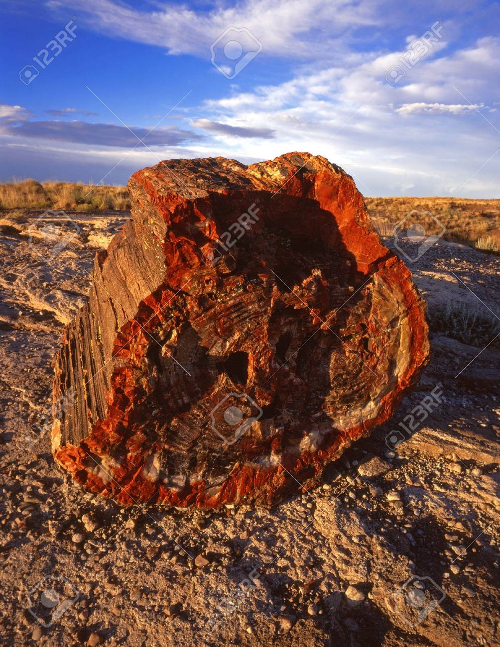 Part of a petrified tree in Petrified Forest National Park, Arizona. Stock Photo - 814680