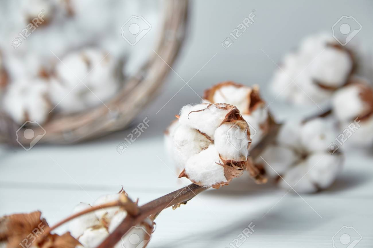 A branch of soft cotton flowers is lying on a white wooden table - 115176126
