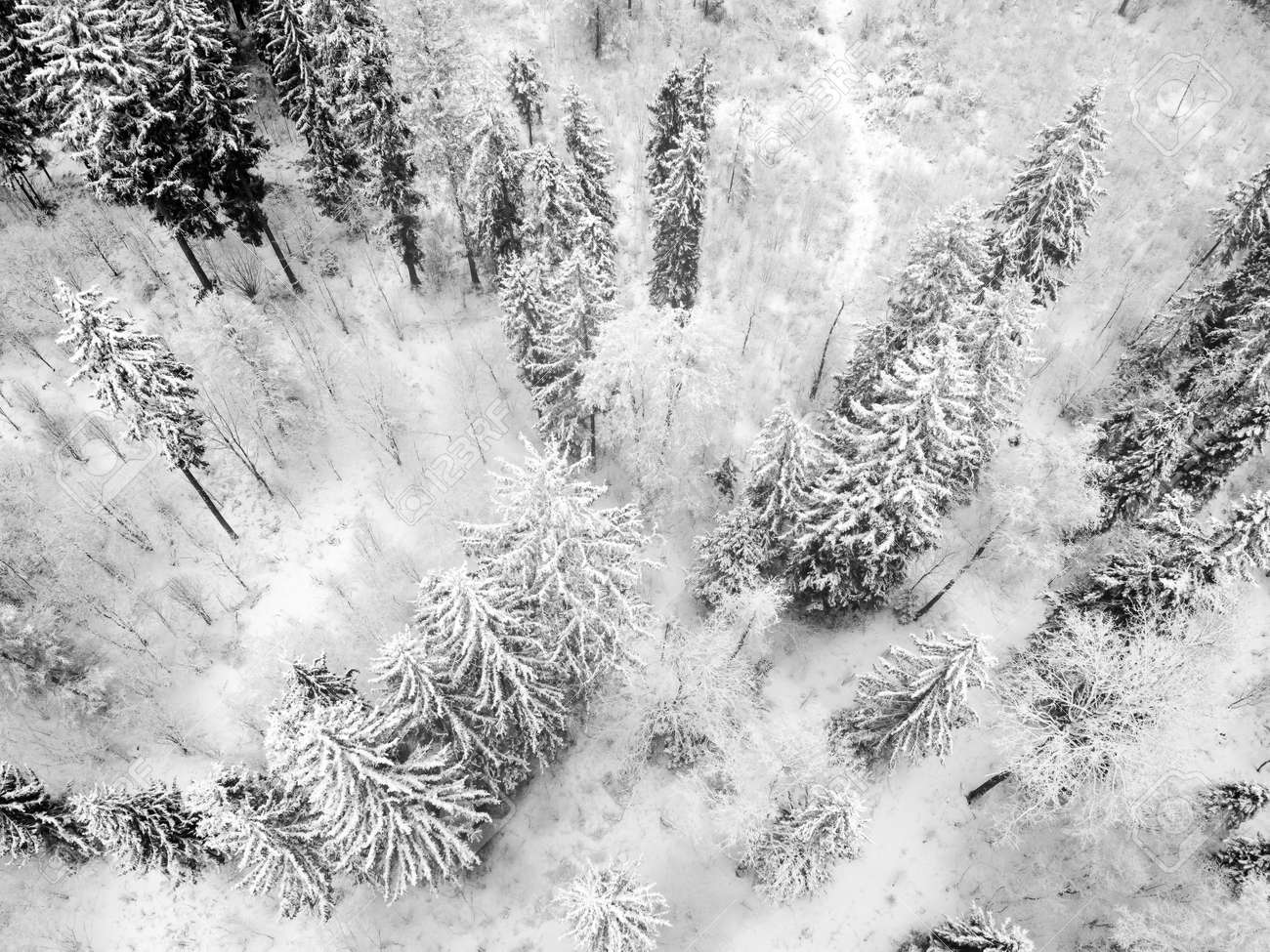 Winter forest with snowy trees, aerial view. Winter nature, aerial landscape, trees covered white snow. Black and white photography - 171676186
