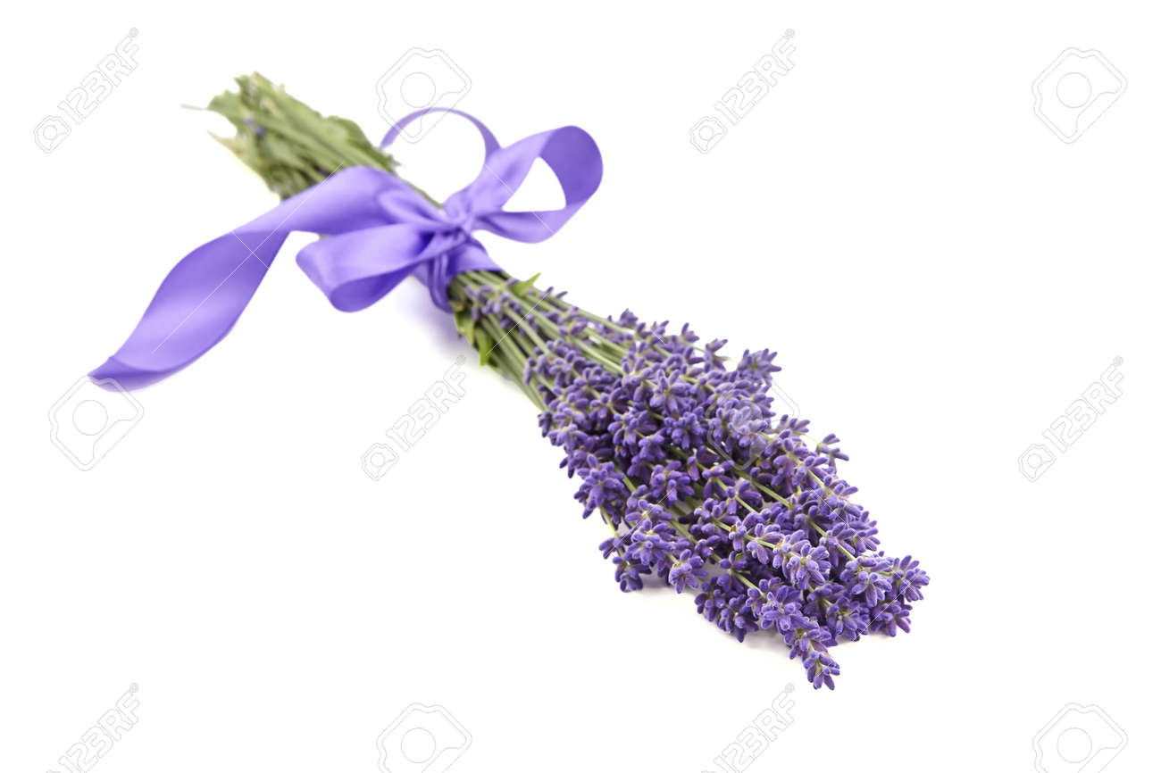 Lavender flowers bouquet with purple ribbon isolated on white background. Fresh aroma flowers - 171630058