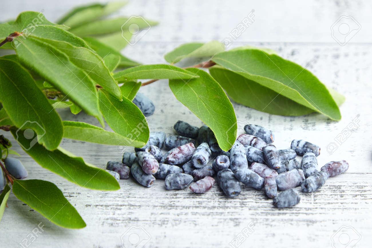 Honeyberry (Lonicera caerulea) on gray wooden background. Heap of sweetberry honeysuckle (Haskap berry) with fresh green leaves - 171676213