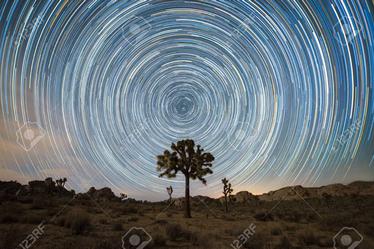 Joshua Tree Under the North Star - 98975325