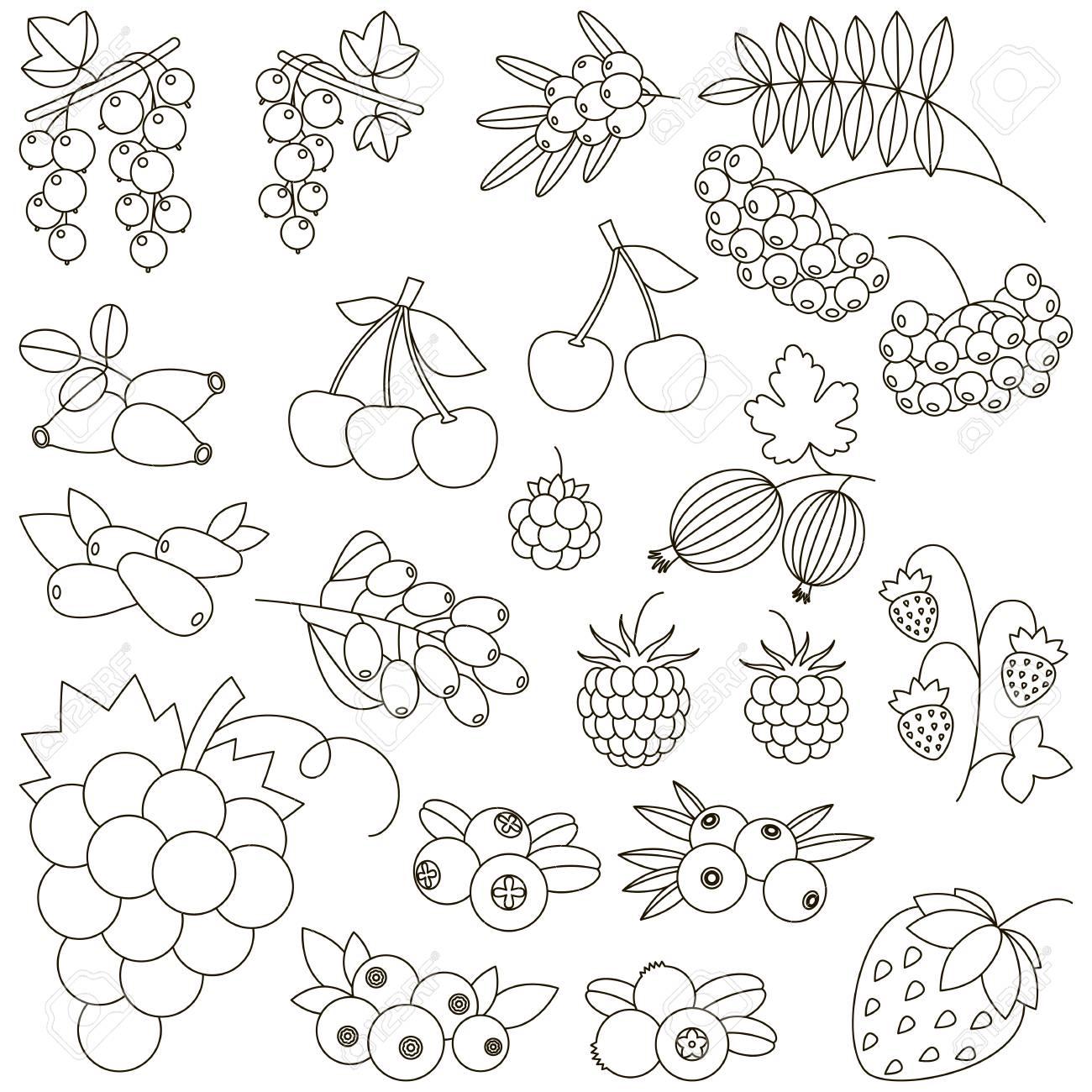 Berry Está Coloreado. Libro De Colorear Para Educar A Los Niños ...