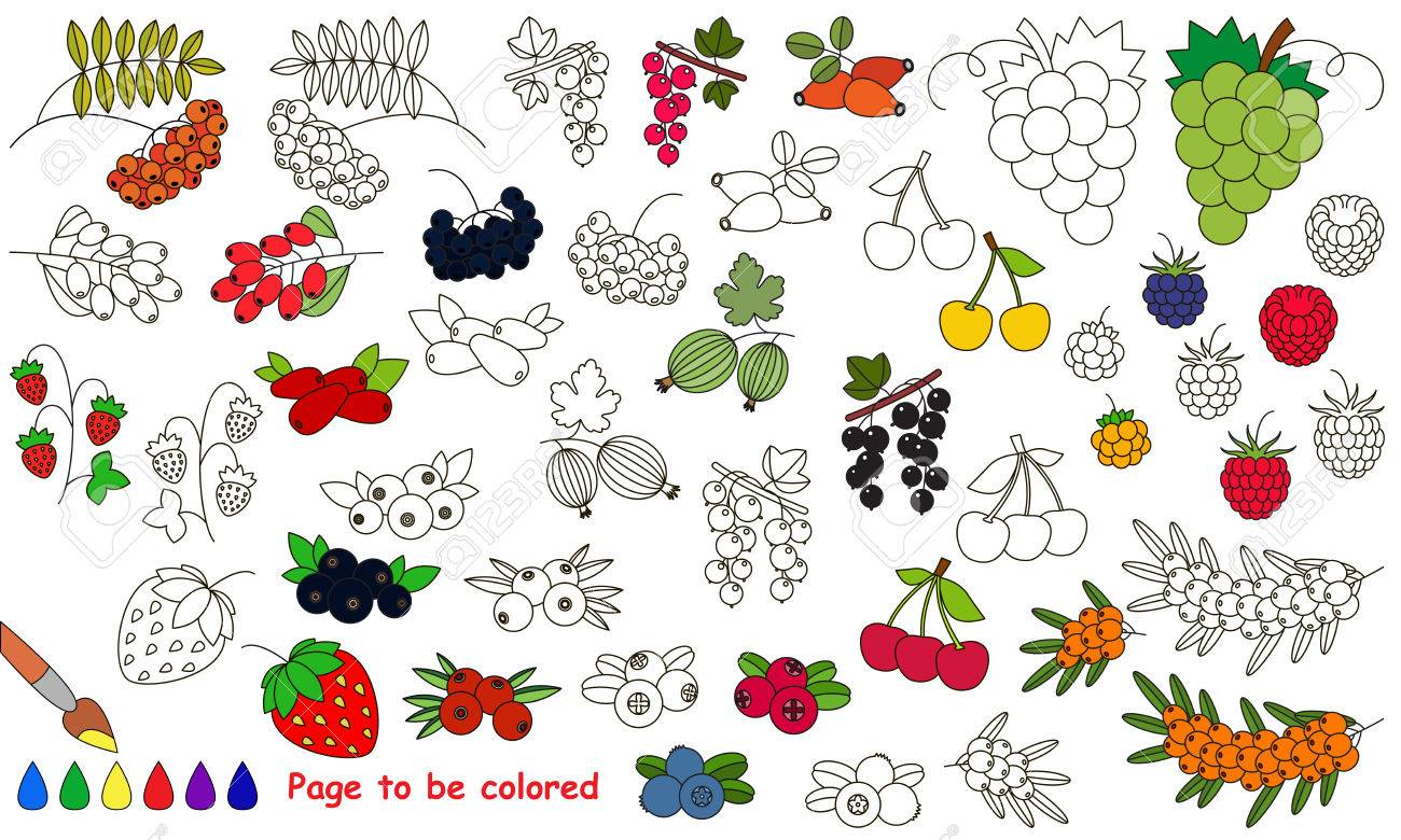 Berries set to be colored. Coloring book to educate kids. Learn..