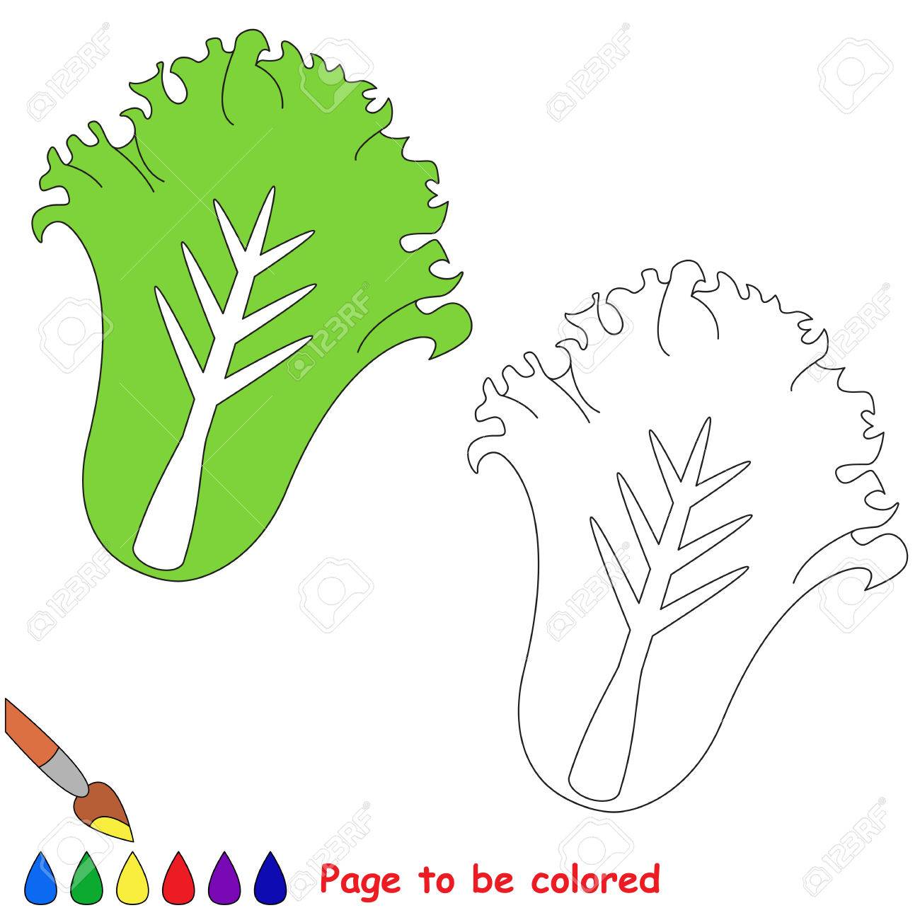Green Lettuce To Be Colored, The Coloring Book For Preschool ...