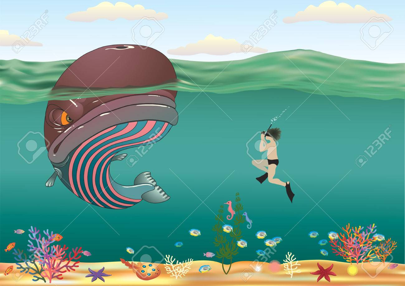 Curious diver photographing striped whale Stock Vector - 6317359