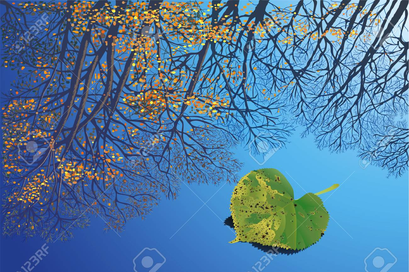 Reflection of trees against a background sky in a pool Stock Vector - 6386952