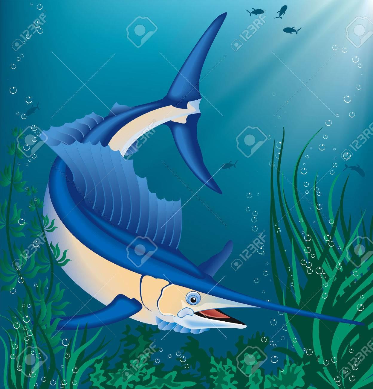 Vector illustration of swimming marlin Stock Vector - 8911301