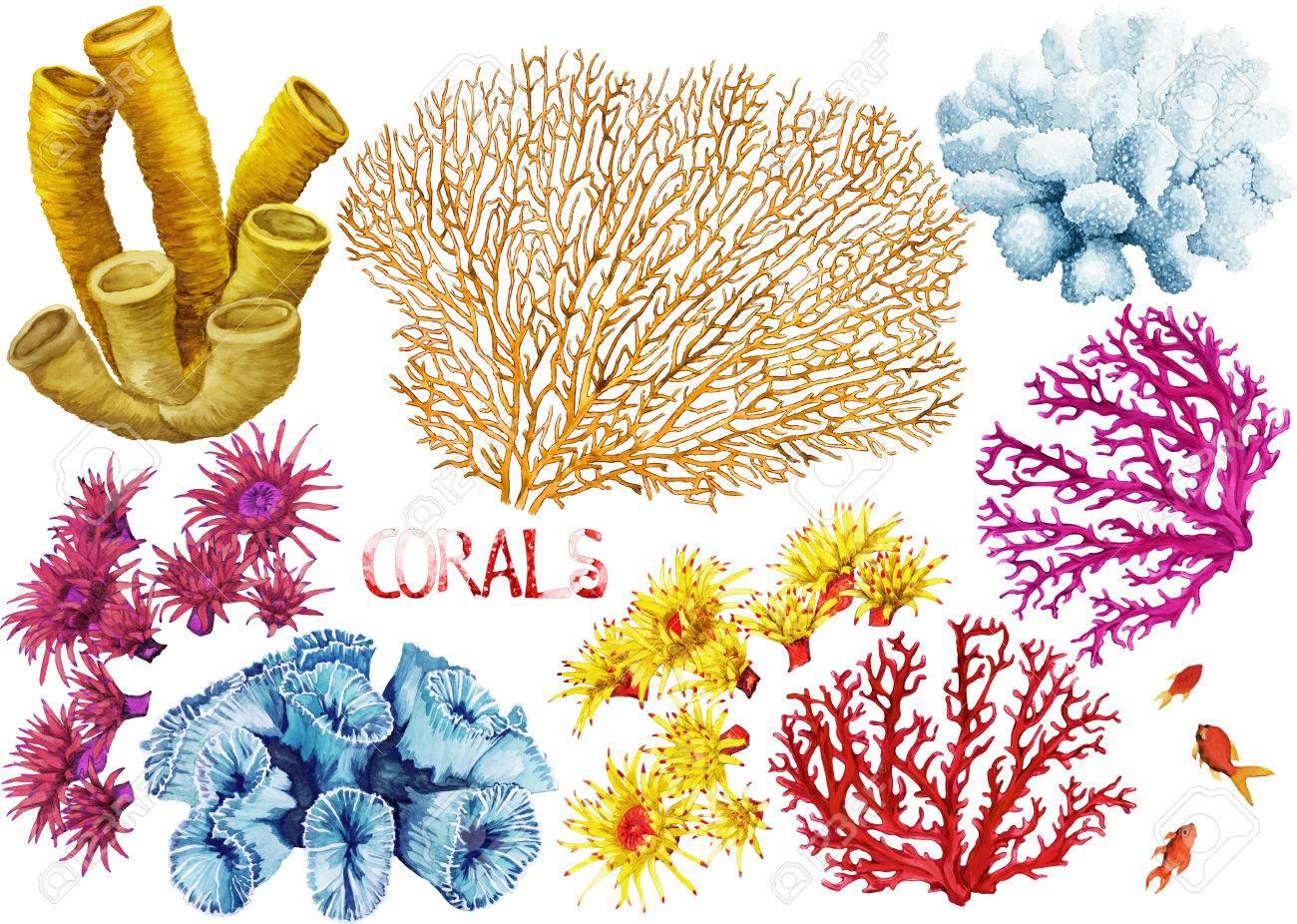 Aquarell Handgezeichneten Korallen Auf Weißem Hintergrund