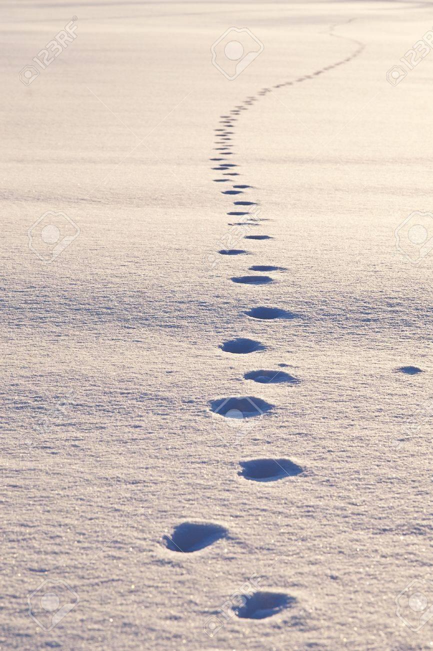 Path of animal tracks in snow, bright sunlight Stock Photo - 19991417